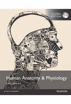human anatomy and physiology 2nd edition amerman pearson