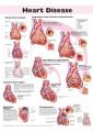 Cardiovascular Medicine - Clinical & Internal Medicine - Medicine - Non Fiction - Books 60