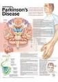 Medical and Anatomical Charts 60