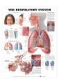 Medical and Anatomical Charts 20
