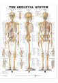 Anatomy Books & Flash Cards 8