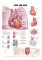 Medical and Anatomical Charts 18