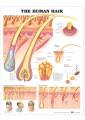 Medical Study & Revision Guide - Medicine - Non Fiction - Books 12