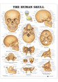 Anatomy Books & Flash Cards 16