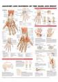 Medical and Anatomical Charts 56